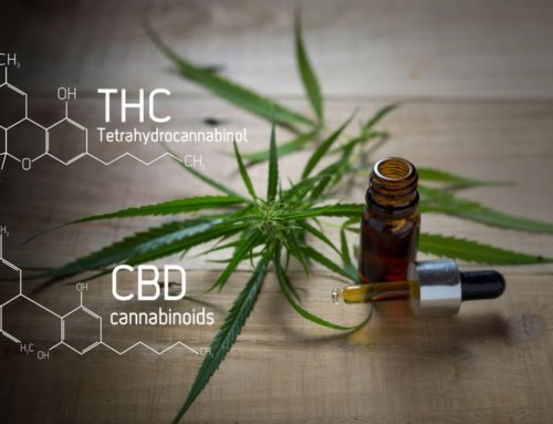 CBD Oil: Feel Good Plant Medicine